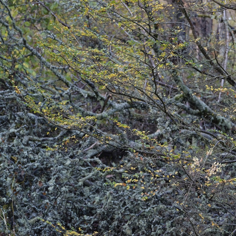Christopher-Swan-Pollok-Park-Glasgow-2014-Novemebr 72014-11-09.jpg