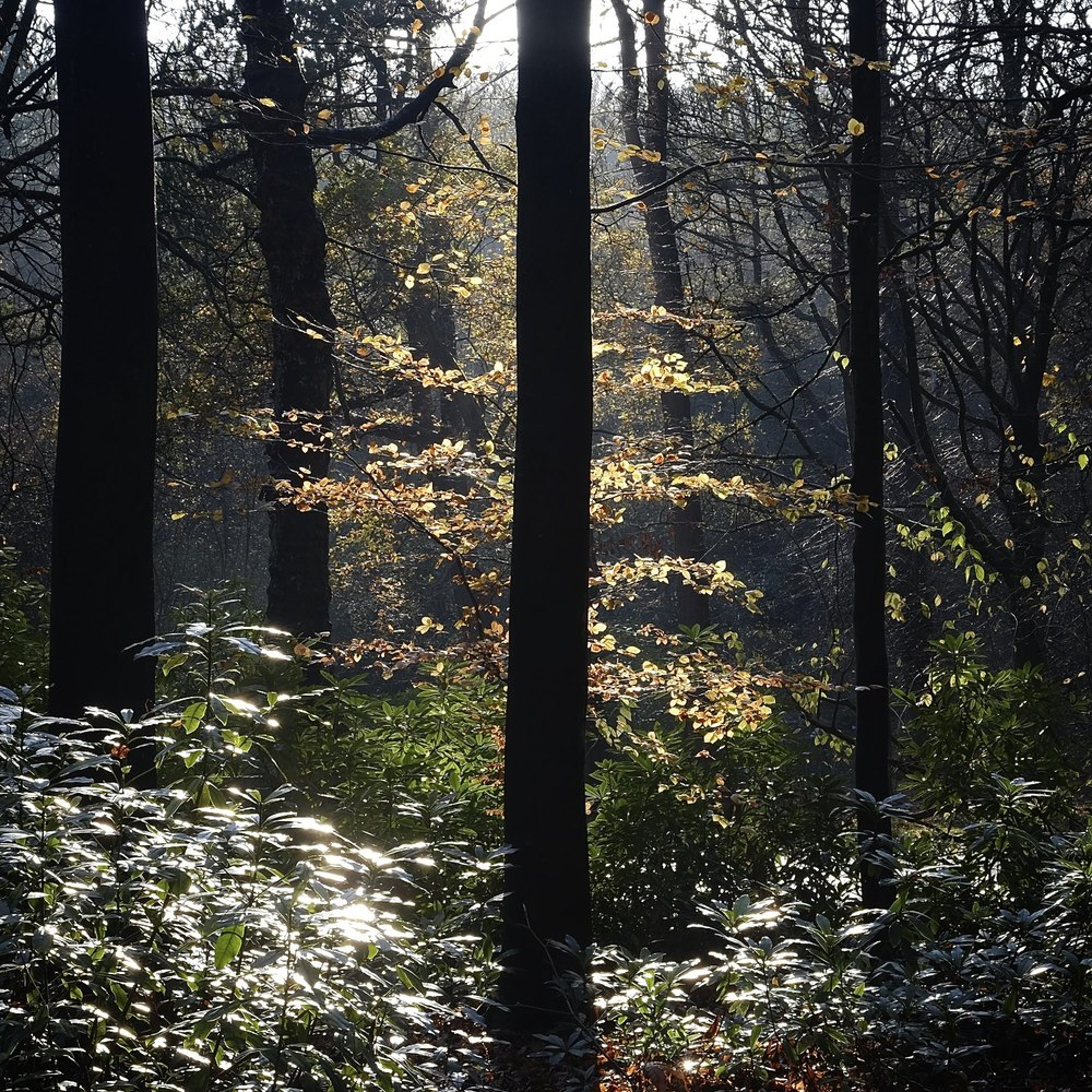 Christopher-Swan-Pollok-Park-Glasgow-2014-Novemebr 122014-11-09.jpg