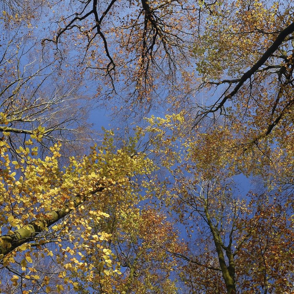 Christopher-Swan-Pollok-Park-Glasgow-2014-Novemebr 132014-11-09.jpg