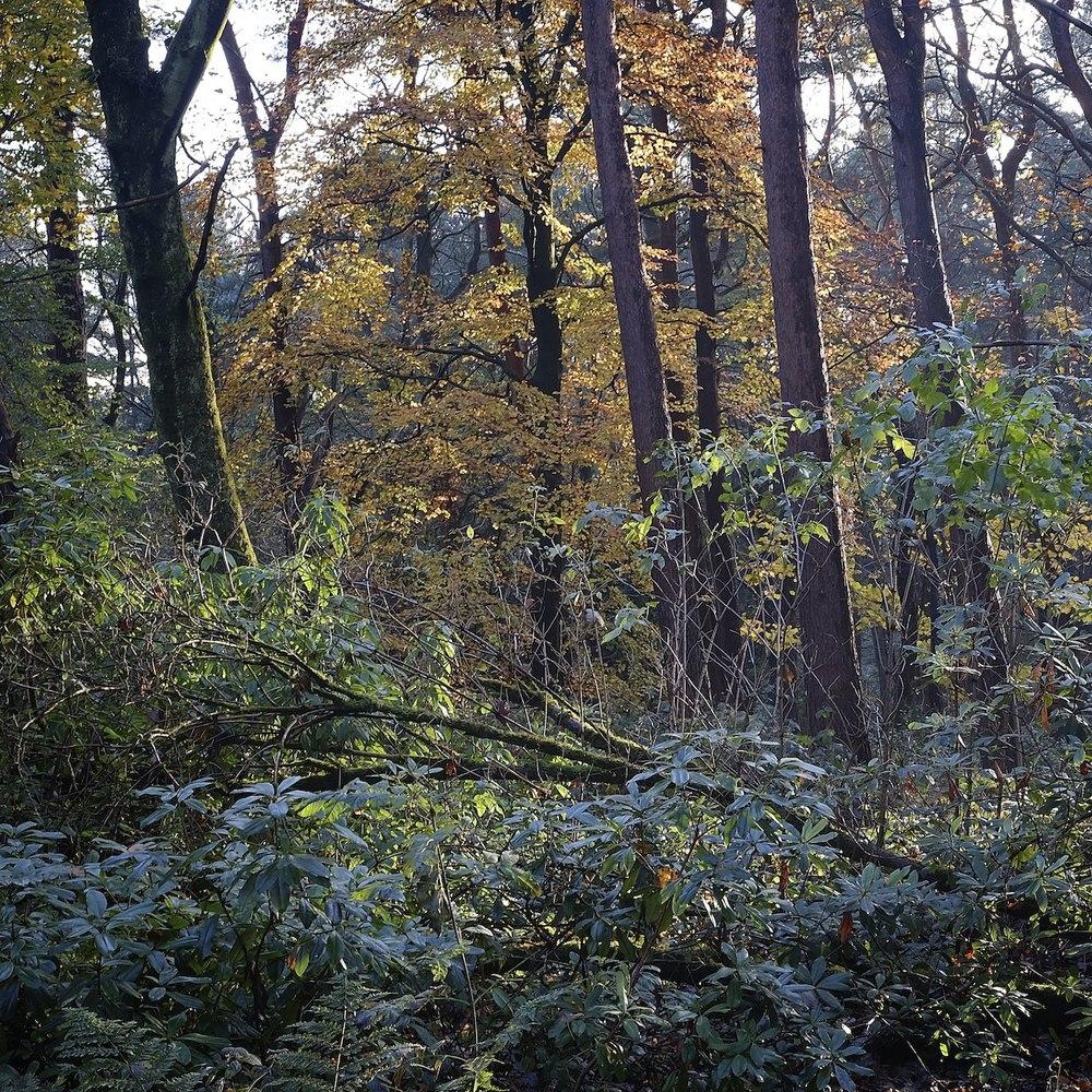 Christopher-Swan-Pollok-Park-Glasgow-2014-Novemebr 112014-11-09.jpg