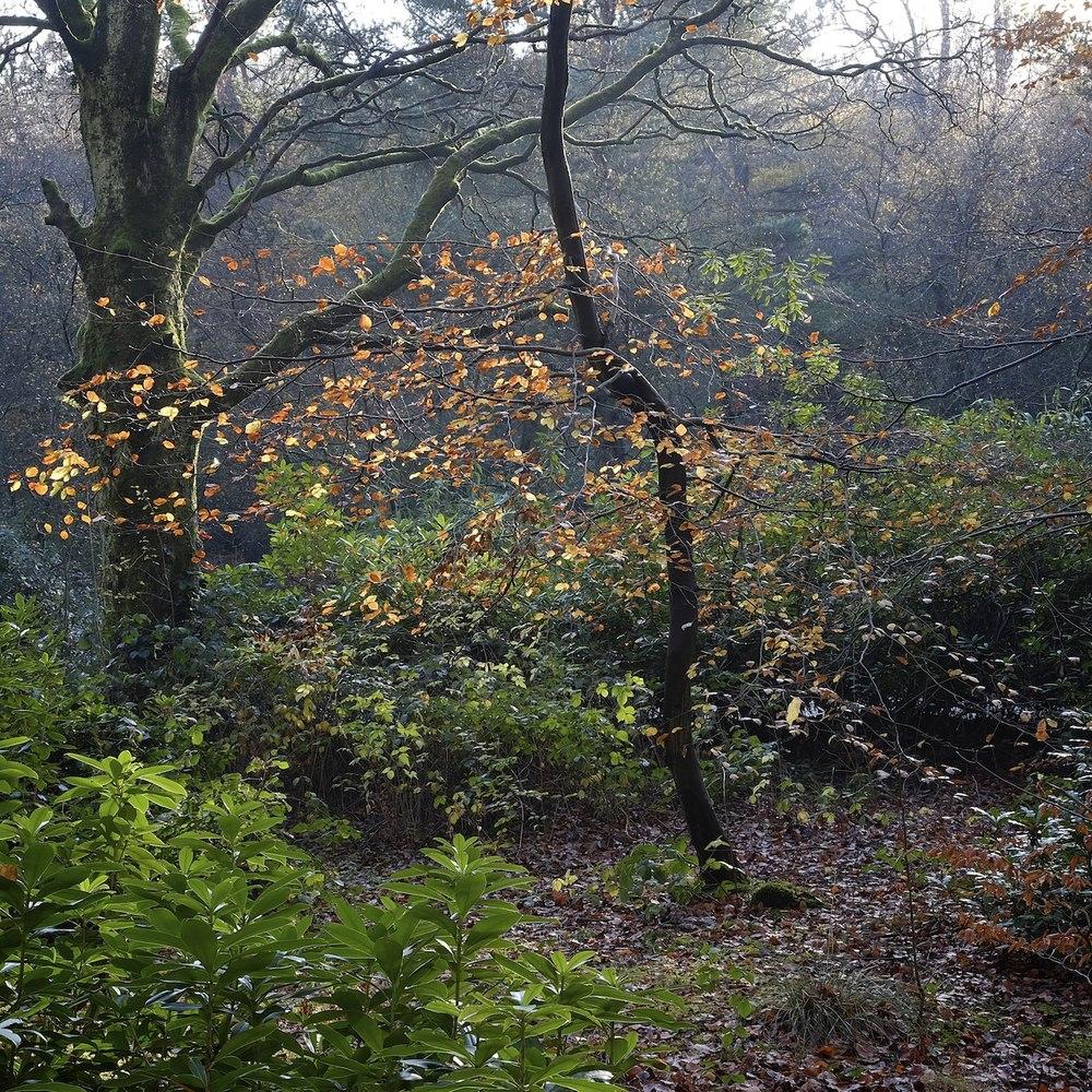 Christopher-Swan-Pollok-Park-Glasgow-2014-Novemebr 142014-11-09.jpg