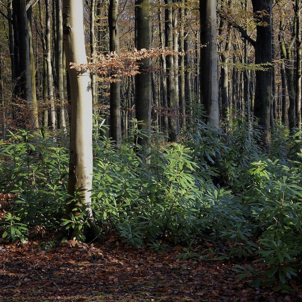 Christopher-Swan-Pollok-Park-Glasgow-2014-Novemebr 152014-11-09.jpg