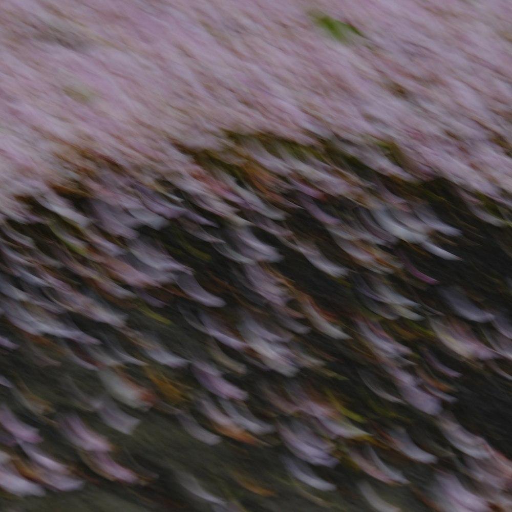 Blossom 14