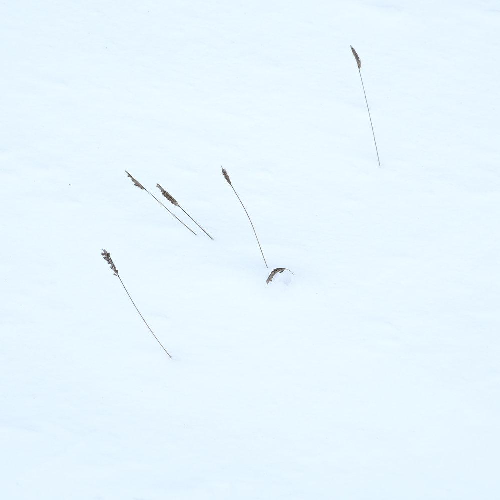 Christopher Swan-Glasgow Snow 3-3.jpg