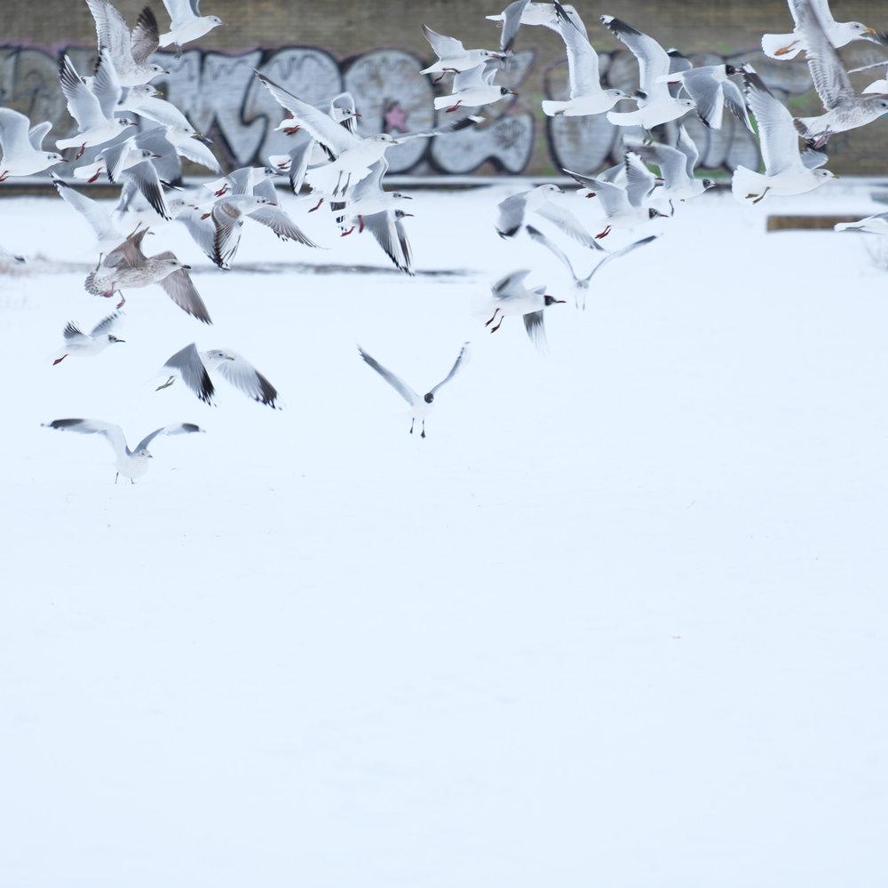 Christopher Swan-Glasgow Snow 3-11.jpg