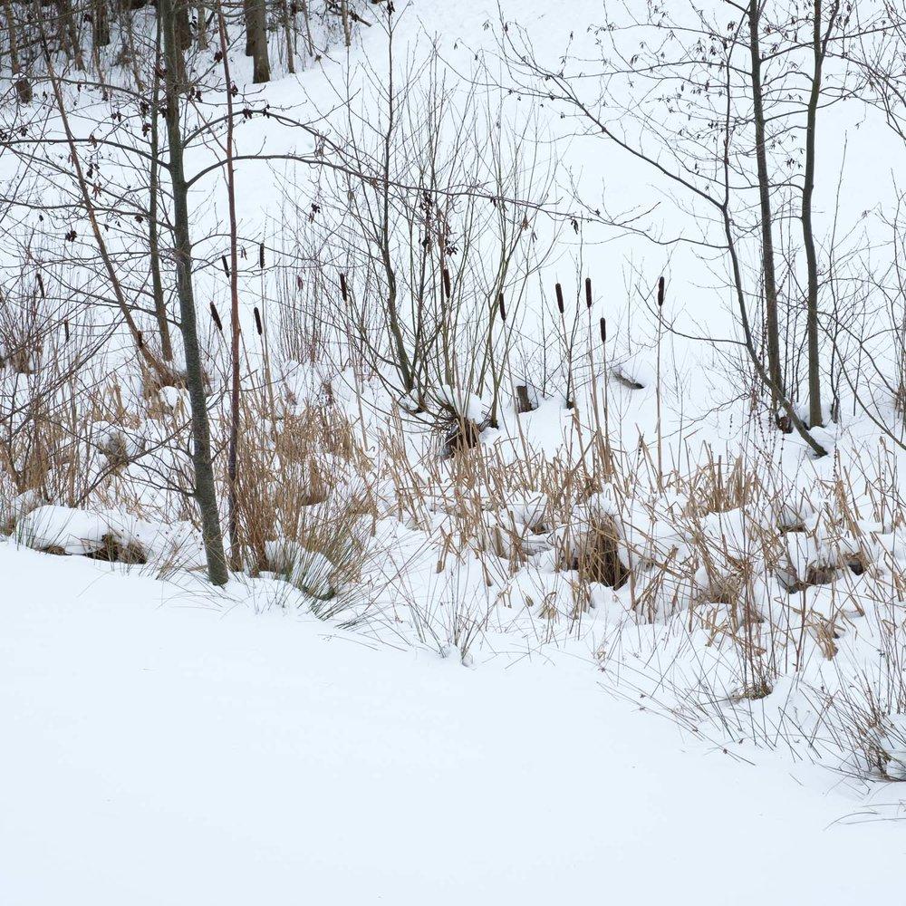 Christopher Swan-Glasgow Snow 3-12.jpg