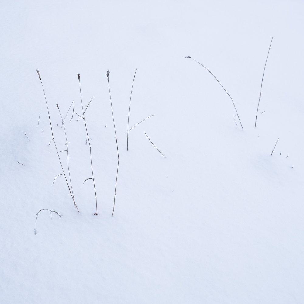 Christopher Swan-Glasgow-Snow-3.jpg
