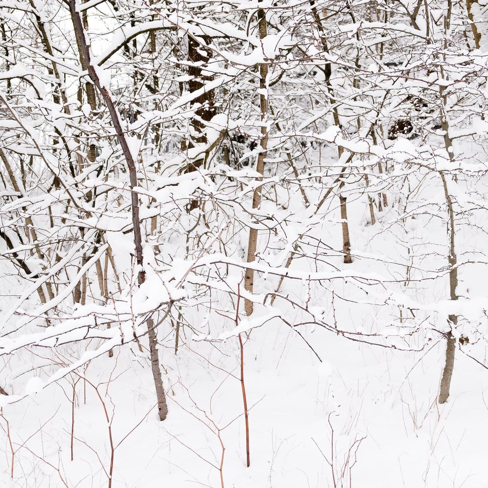 Christopher Swan-Glasgow-Snow-7.jpg