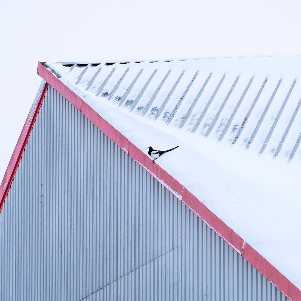 Christopher Swan-Glasgow-Snow-10.jpg