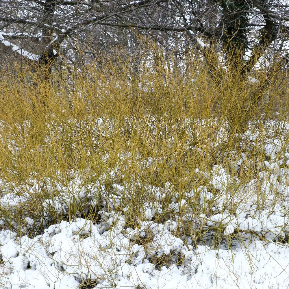 Christopher Swan-Glasgow Snow 3-19.jpg