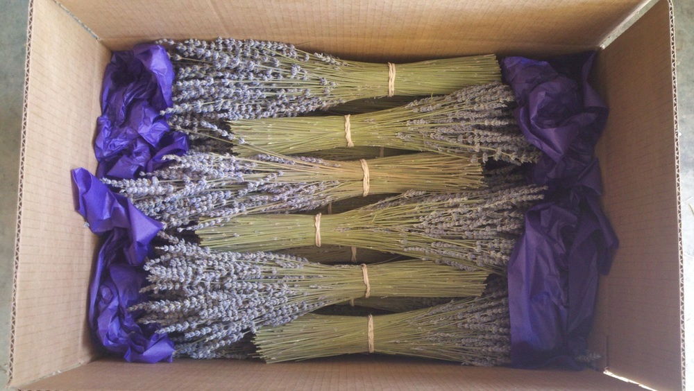 Dried lavender bunches/bundles - Gray's Lavender Farm, Etsy