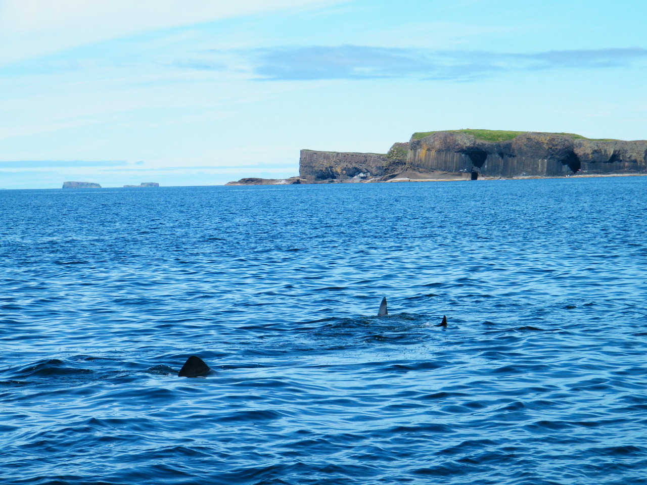 Basking Sharks and Staffa