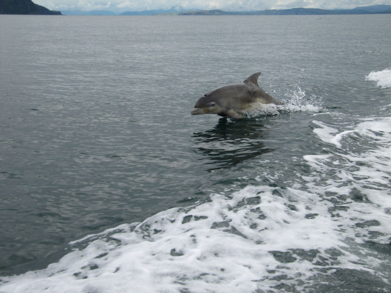 Taken by Ayushi patel A stunning photo of a young Bottle nose Dolphin