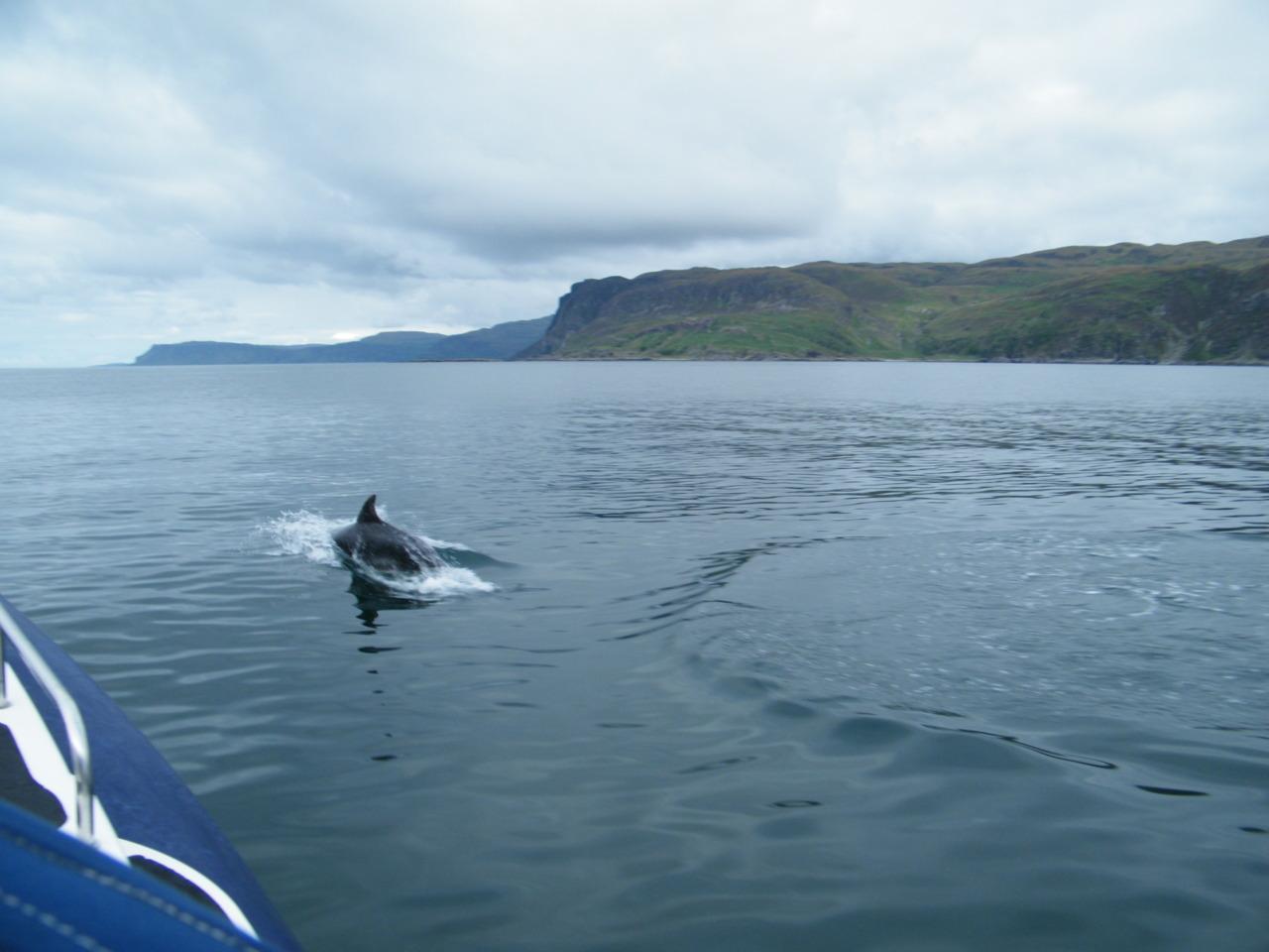 Bottlenose Dolphins near Mull