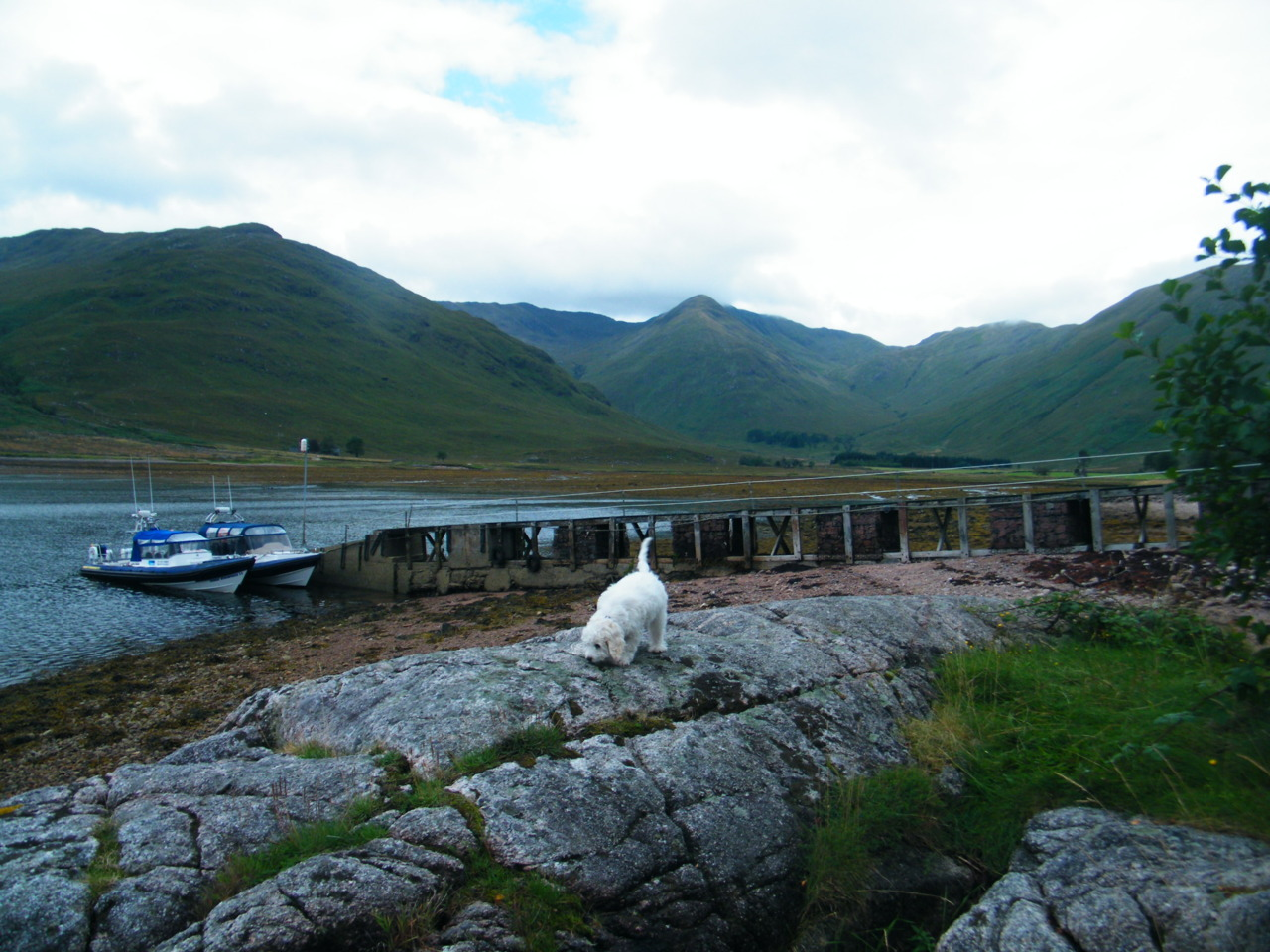 Ghillie having a wander about Kingairloch Estate