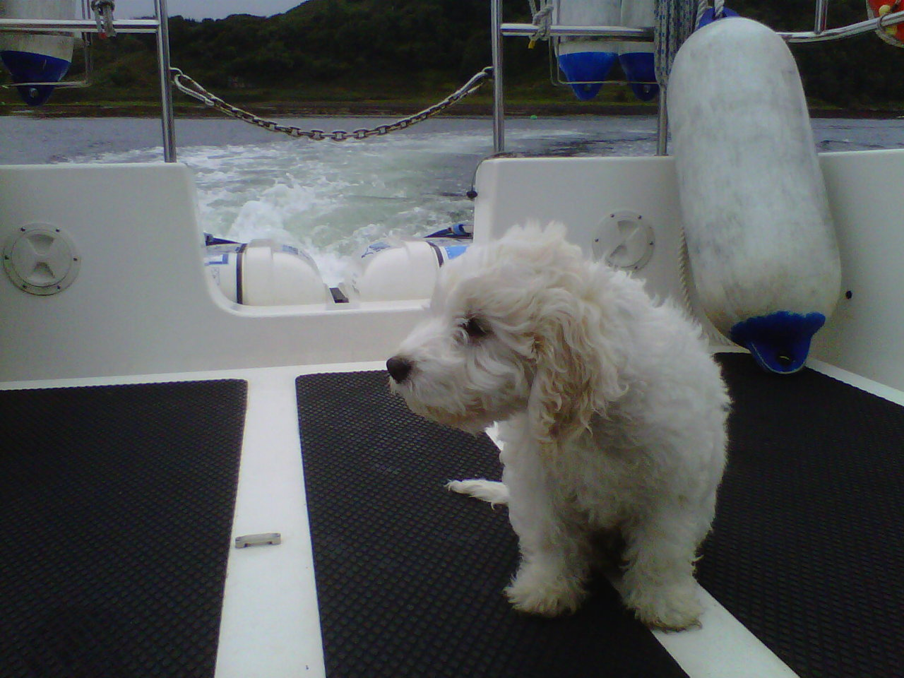 Ghillie getting used to the boat