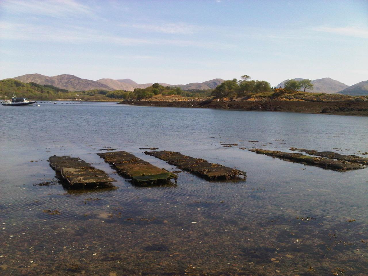 Oyster beds in Loch Crearn