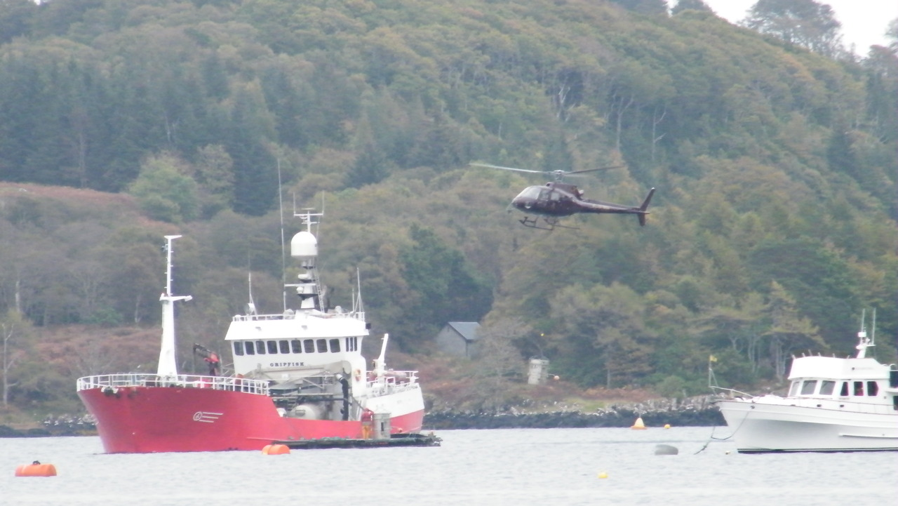 Transporting fish by helicopter