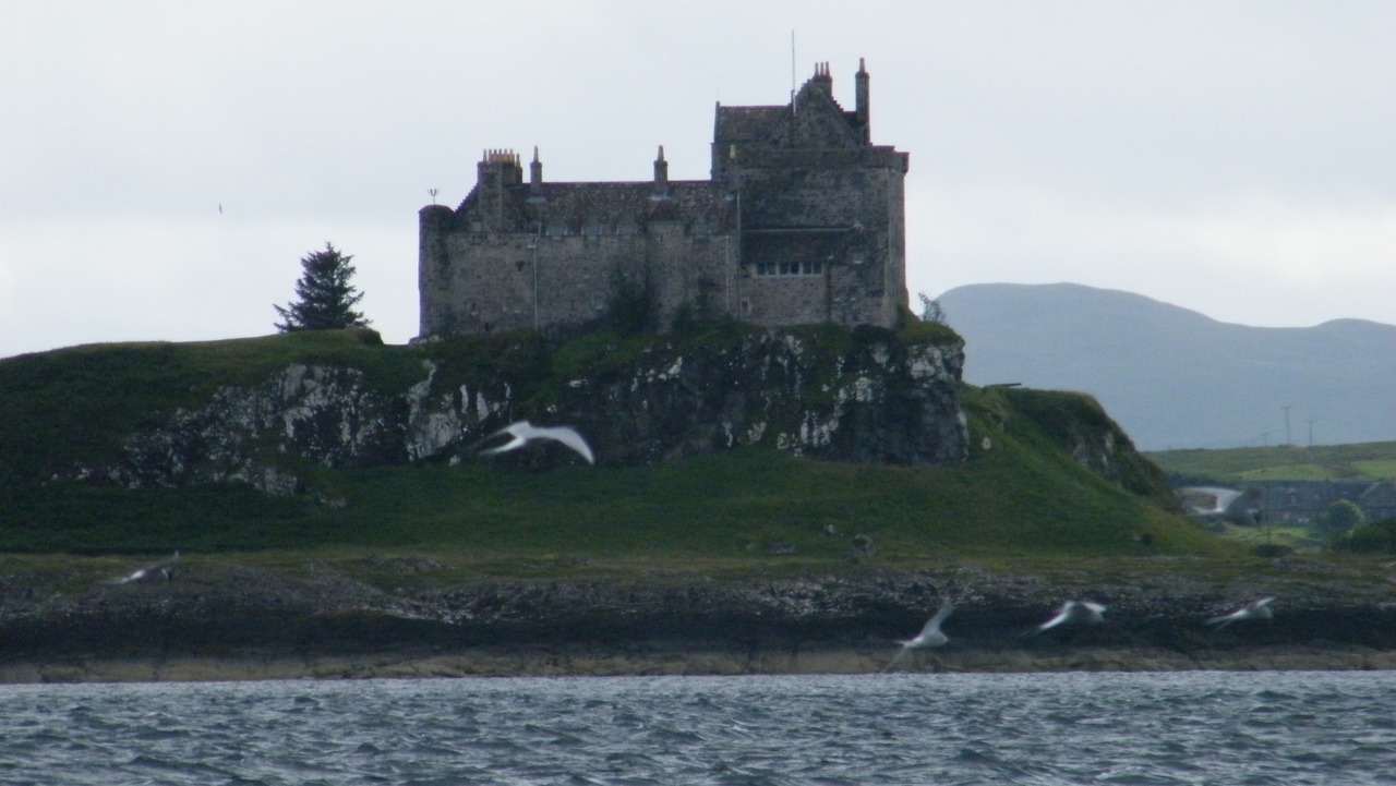 Terns and Duart castle in the background