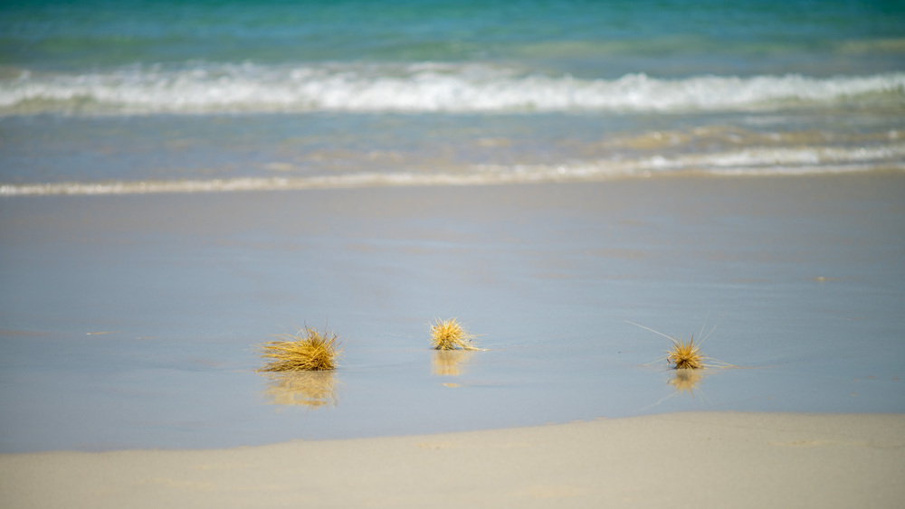 Tumbleweed (Leighton Beach)