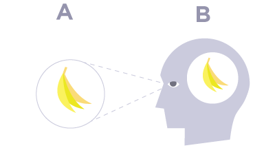 perceiving-bananas