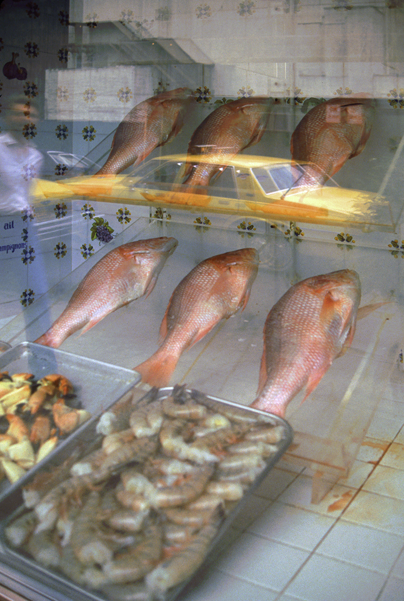 Fish Store, Brooklyn  , 2010; Archival pigment print; 19 x 13 inches