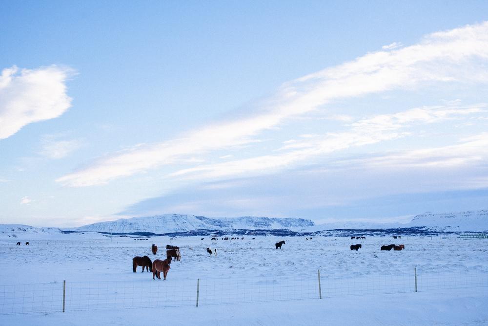 Iceland - Exploress-23.jpg