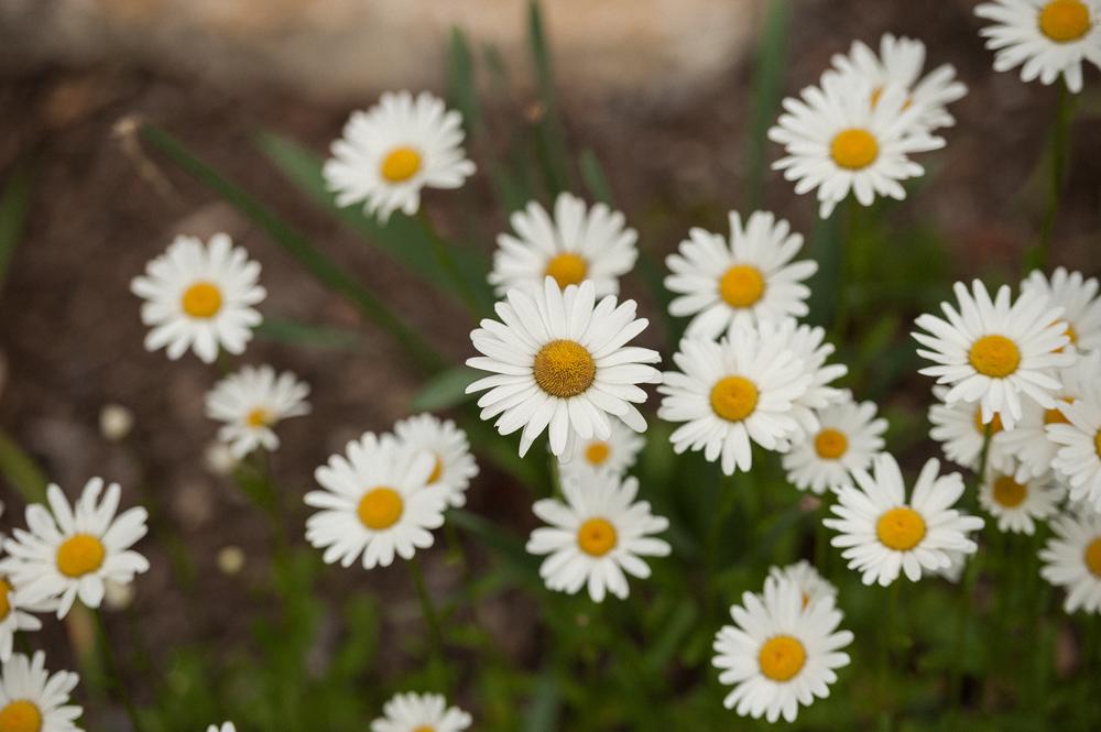 TaraShupe_EVIE_Spring2015_9215.jpg