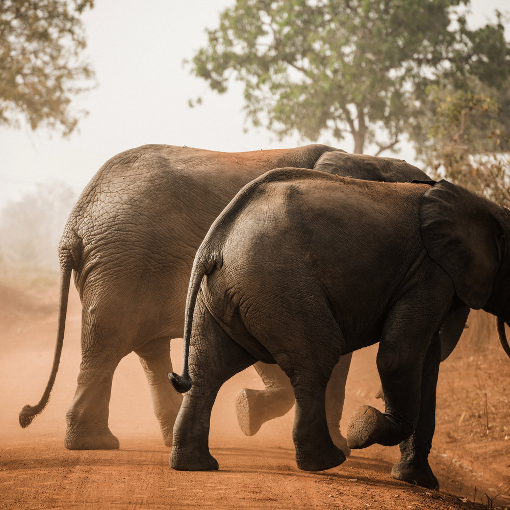 Ghana_African_Humanitarian_Photographer_TaraShupe_Safari_013.jpg