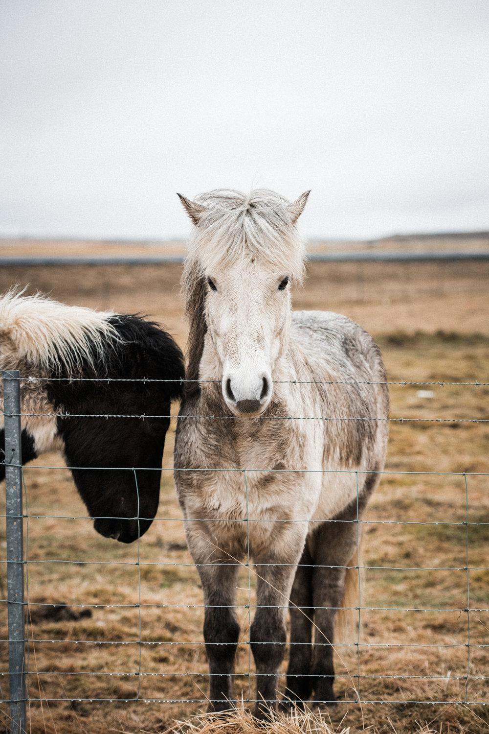 ICELAND_WOMAN_PHOTOGRAPHER_TARASHUPE_OUTDOOR_PHOTOGRAPHY_004.jpg