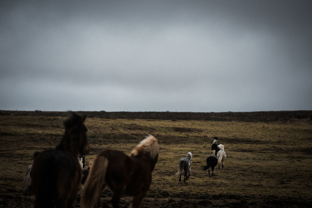 ICELAND_WOMAN_PHOTOGRAPHER_TARASHUPE_OUTDOOR_PHOTOGRAPHY_005.jpg