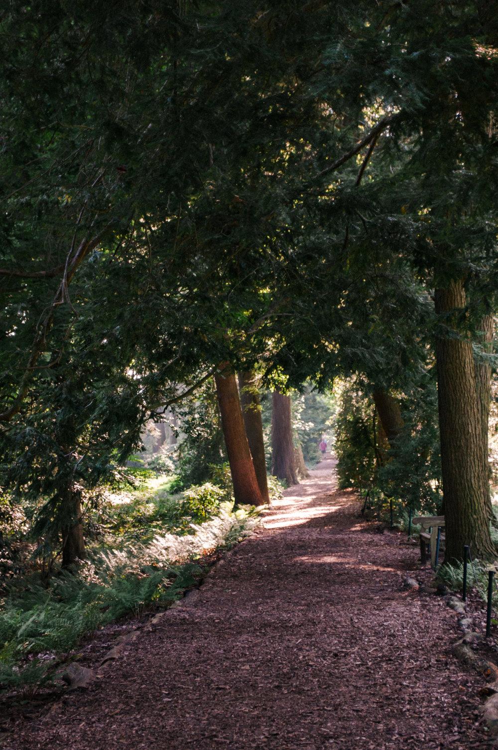 longwood_eveningforest-1.jpg