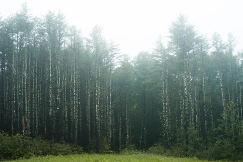 cumberland-maine-fog