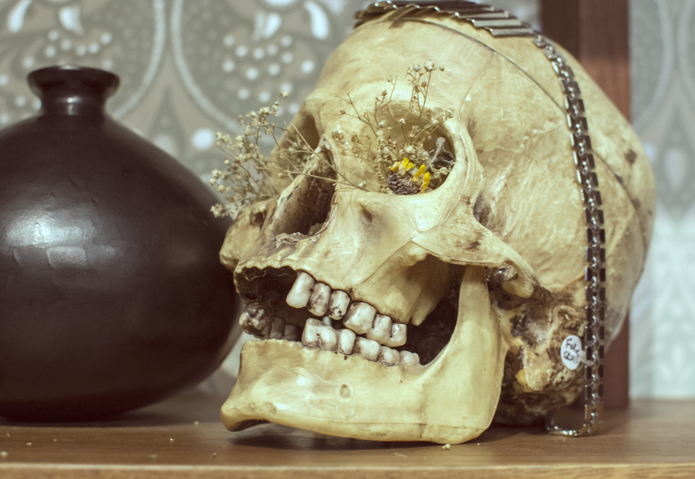 skull at feathers.jpg