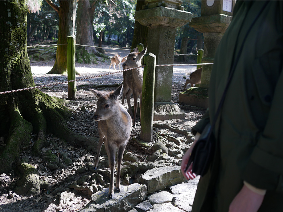 Japan_0002_P1030898.jpg