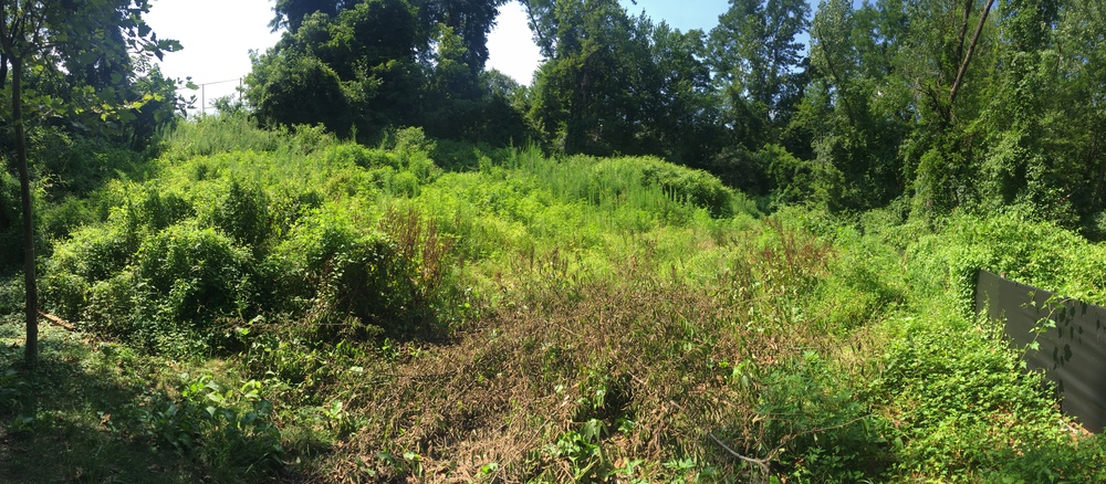 July 31, the dog park space is again overgrown with brush after three community efforts to clean it. The City hopes to start construction soon, however.