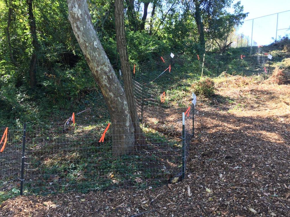 Tree protection fencing.Photo © Joe Edgell