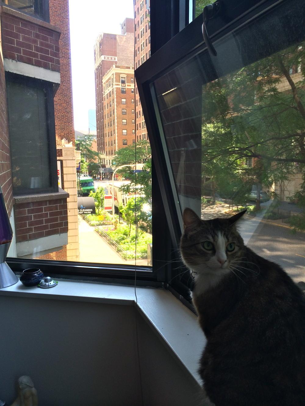 Gigi enjoying the bay window and nice day