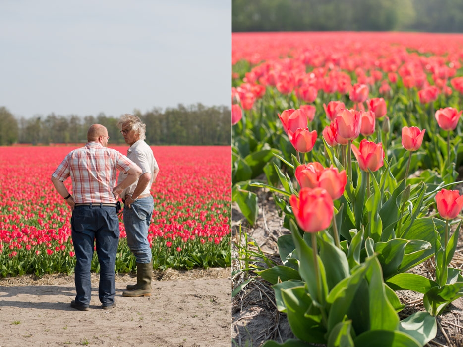 holland tulip fields_010.jpg