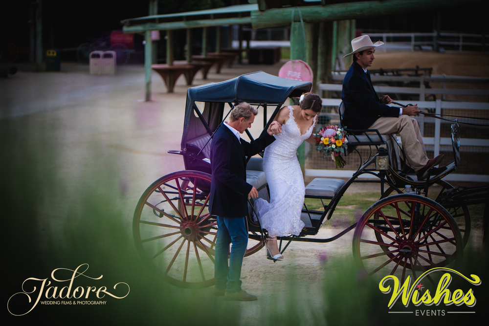 Bride Arrives in Horse & Carriage Paradise Country Wedding Ceremony Gold Coast