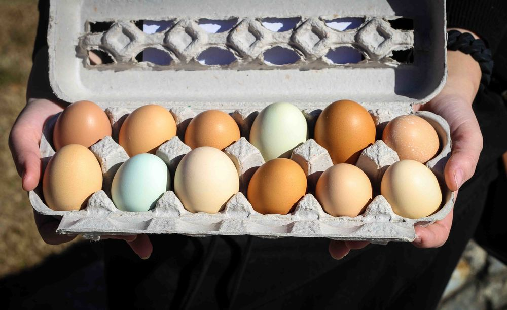 I couldn't get enough of these eggs - some were speckled and were beautiful shades of green and blue. They came from  Bella Grove Farm  in Goochland County, Virginia.