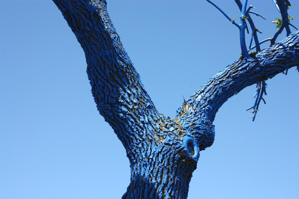 Blue tree, Chicago, IL / Photo credit: Susannah Breslin