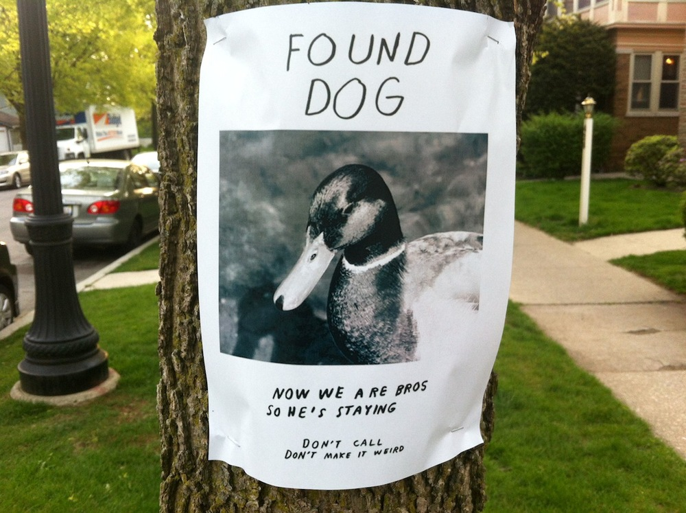 Found dog, Chicago, IL / Photo credit: Susannah Breslin
