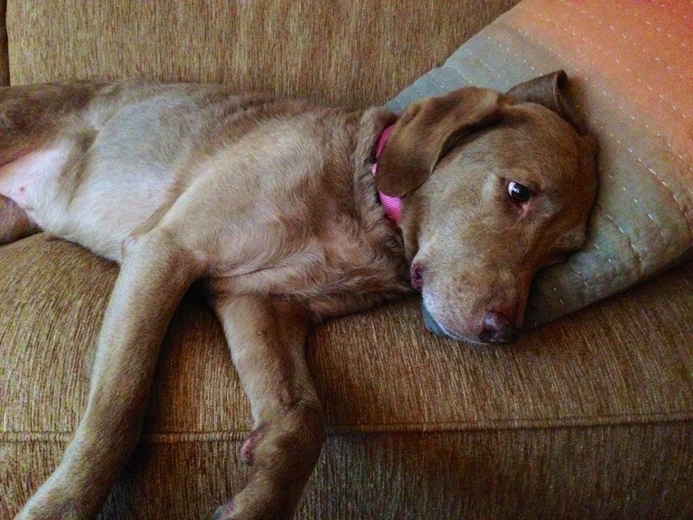 Dog, Naples, FL / Photo credit:  Susannah Breslin