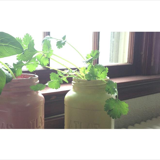 Mason Jar Planters | Jordan A. Smith