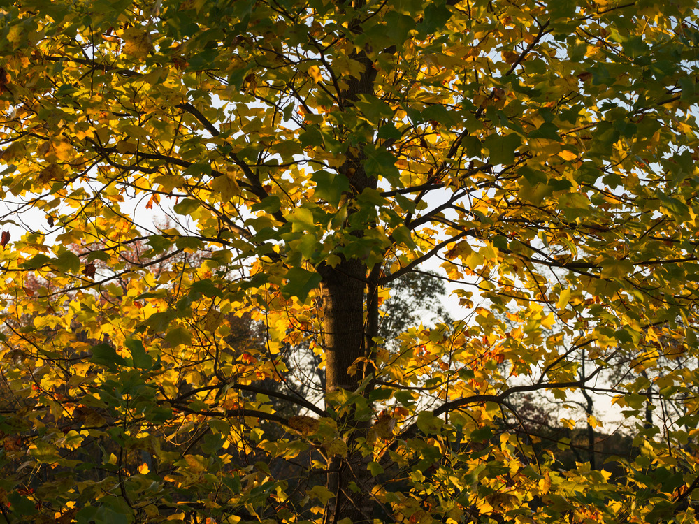 Fall Colors. This one is important mainly because I saw nice colors through the window of the gym and acted without hesitation. This light comes and goes in matter of minutes and sometimes seconds. My struggle is that I usually think too much and lose images that are right in front of me.
