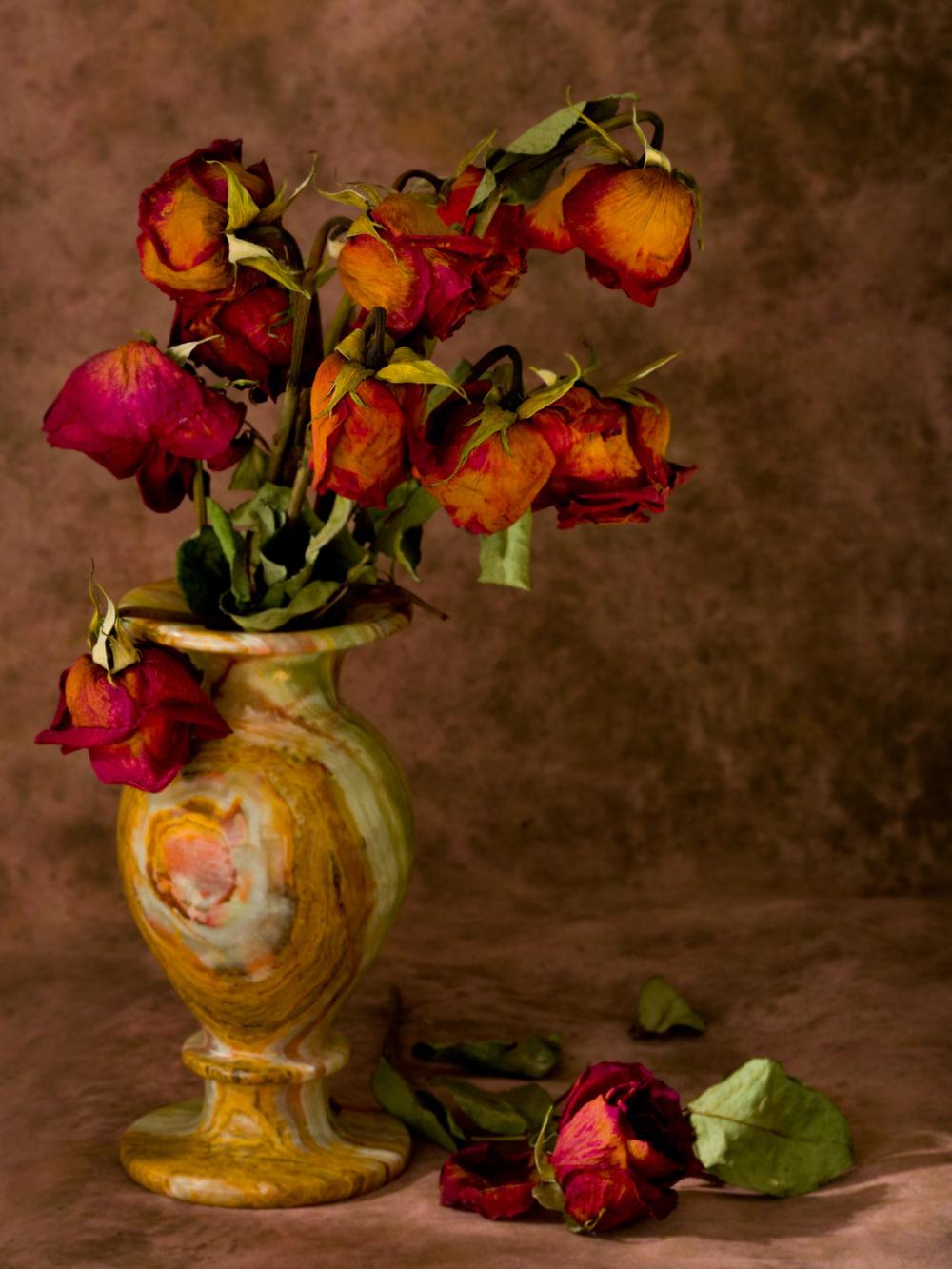 Still Life: Dead Roses