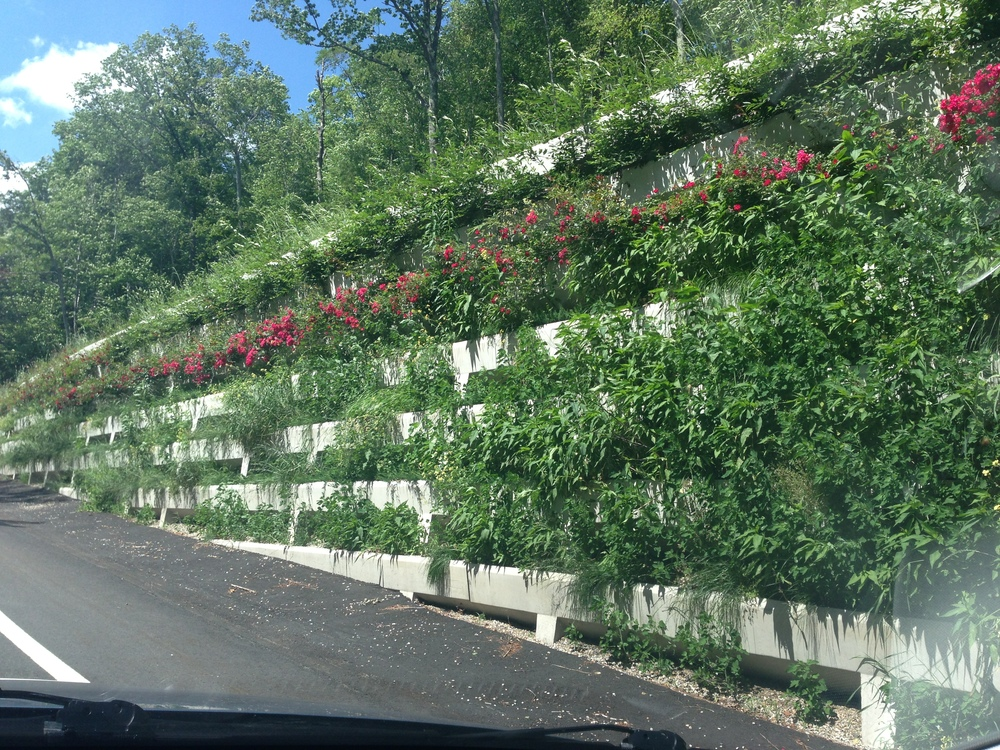 Flowers growing out of the wall on the side of route 2 in MA.