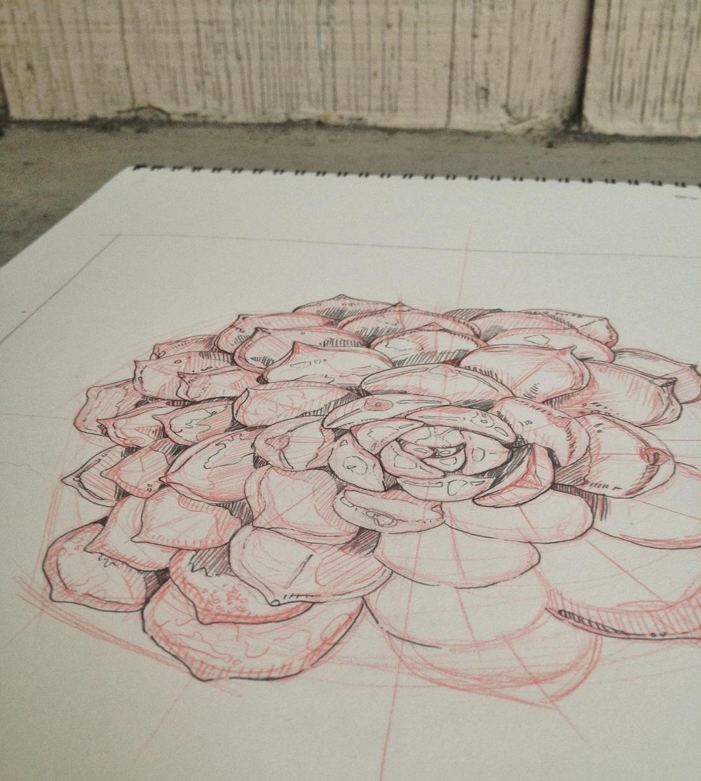 Succulent Sketch by Chloe Yingst   chloedraws.com