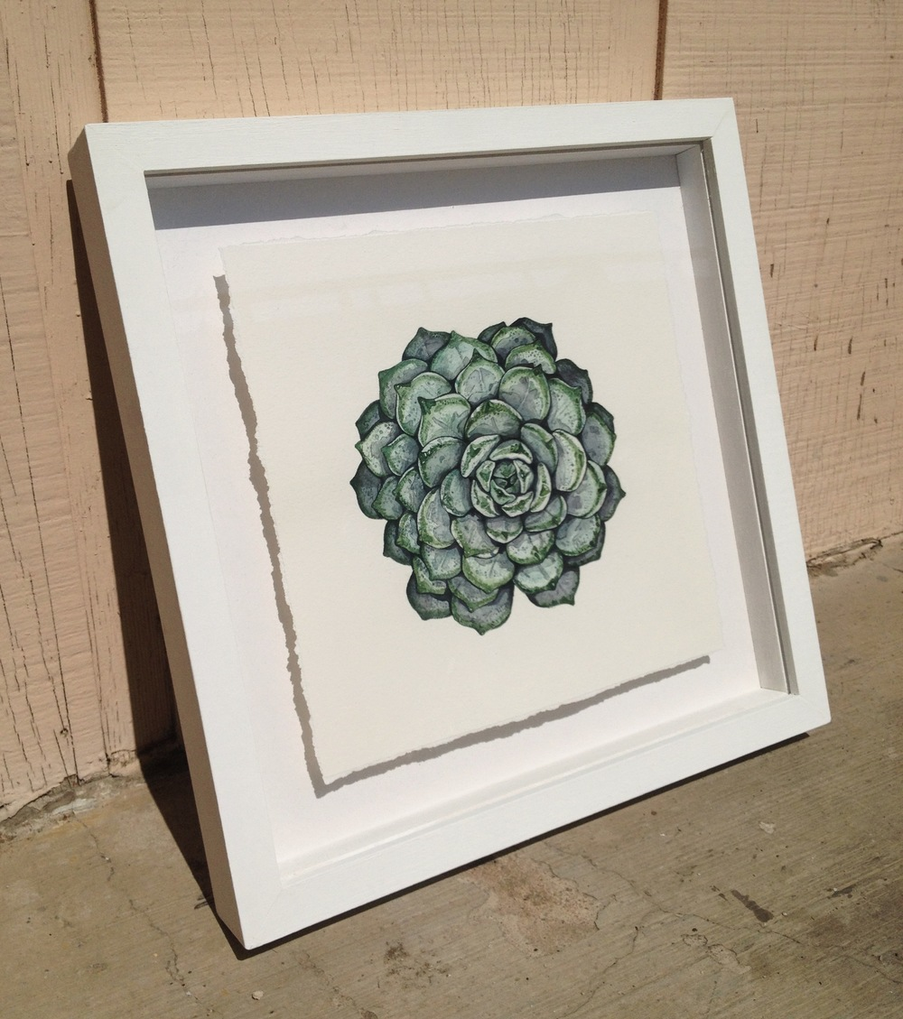 Succulent Painting by Chloe Yingst |  chloedraws.com